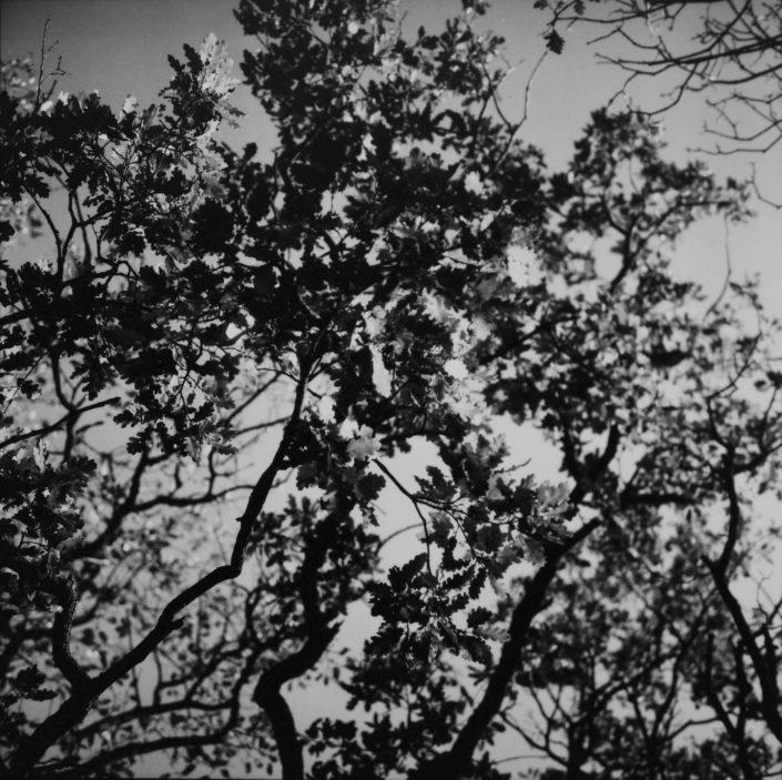 Quelque part I.- analog film_gelatin silver print 11,5x11,5 cm(2021)- closed series (1_1)