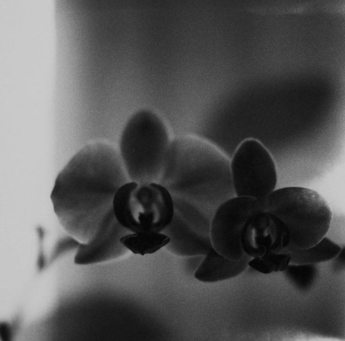 il existait II.- analog film_gelatin silver print 11,5x11,5 cm(2021)- closed series (1_1)