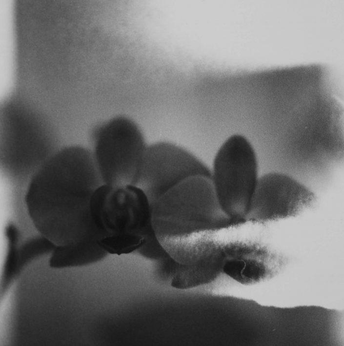 il existait IV.- analog film_gelatin silver print 11,5x11,5 cm(2021)- closed series (1_1)